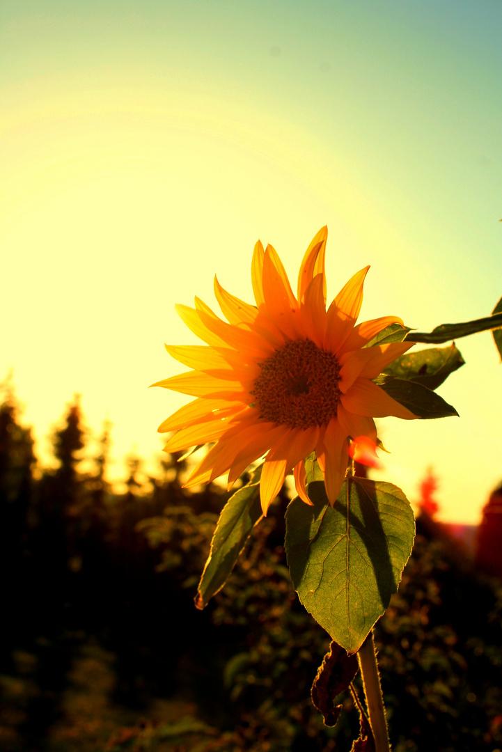 Sun Flow'a