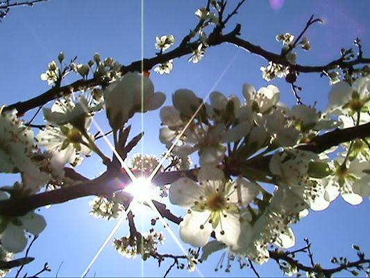 """Sun Flower"""