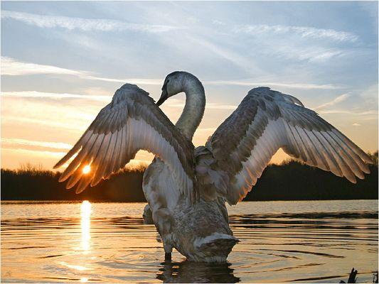 Sun in my Fing..aehm his Wingtips...