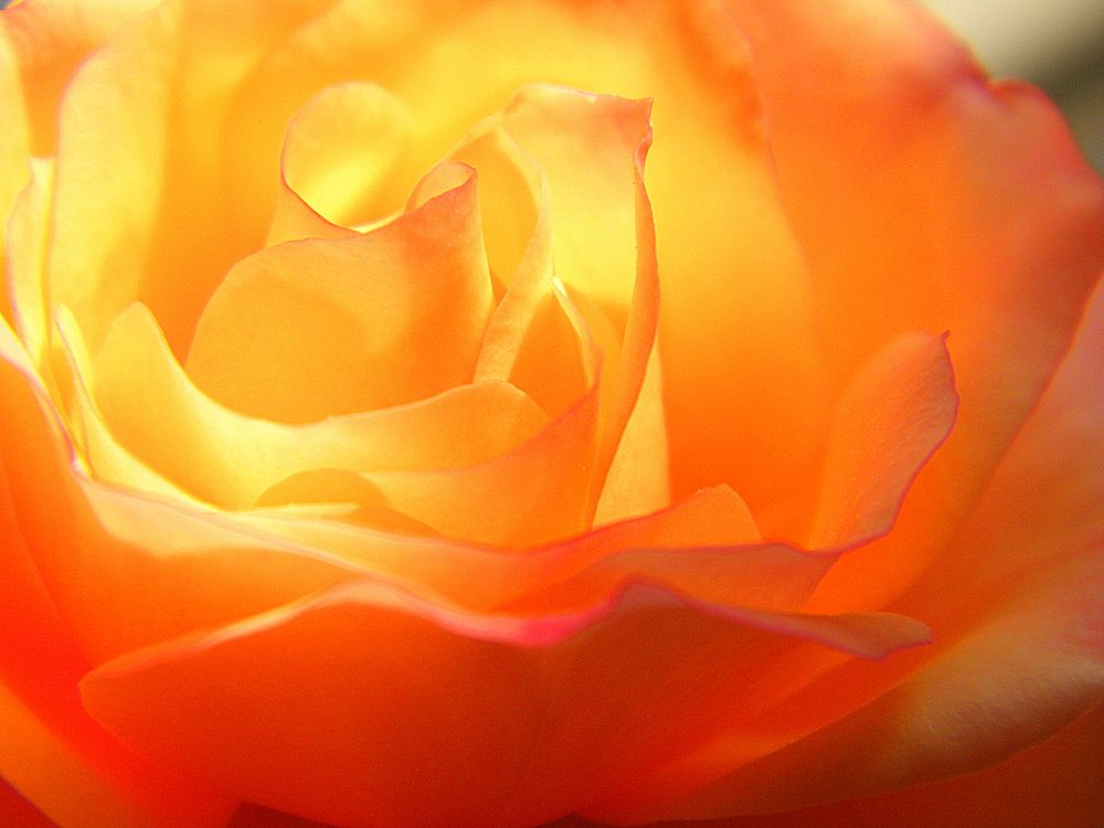 sun in roses von grecolina
