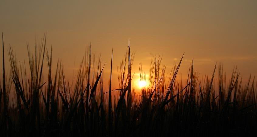Sun is life