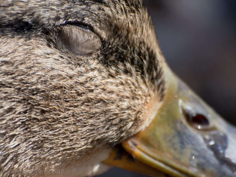 sun loving duckie