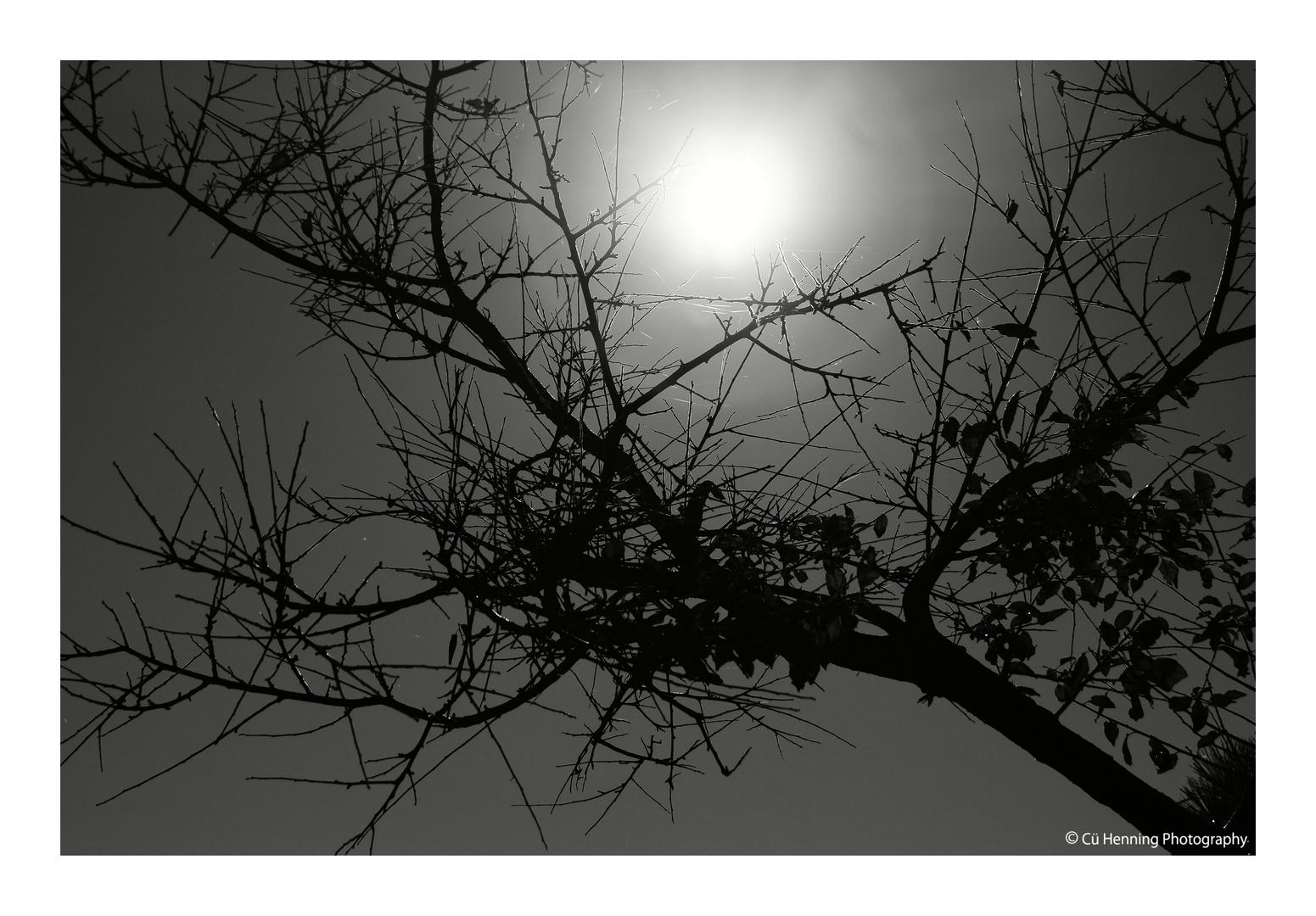 Sun on the tree