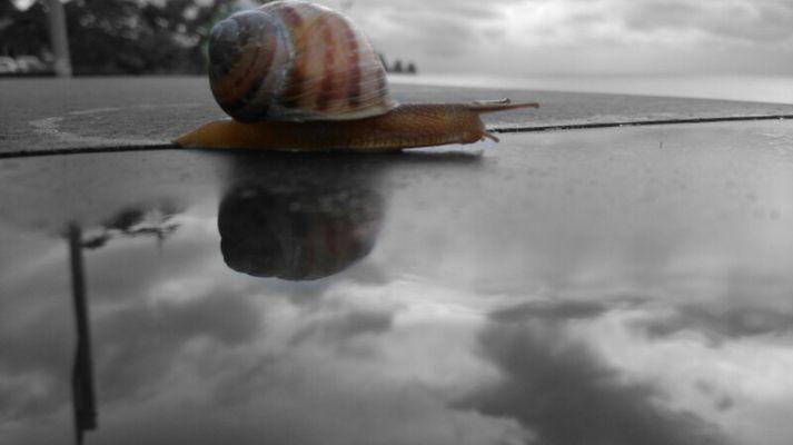 Sun rise snail
