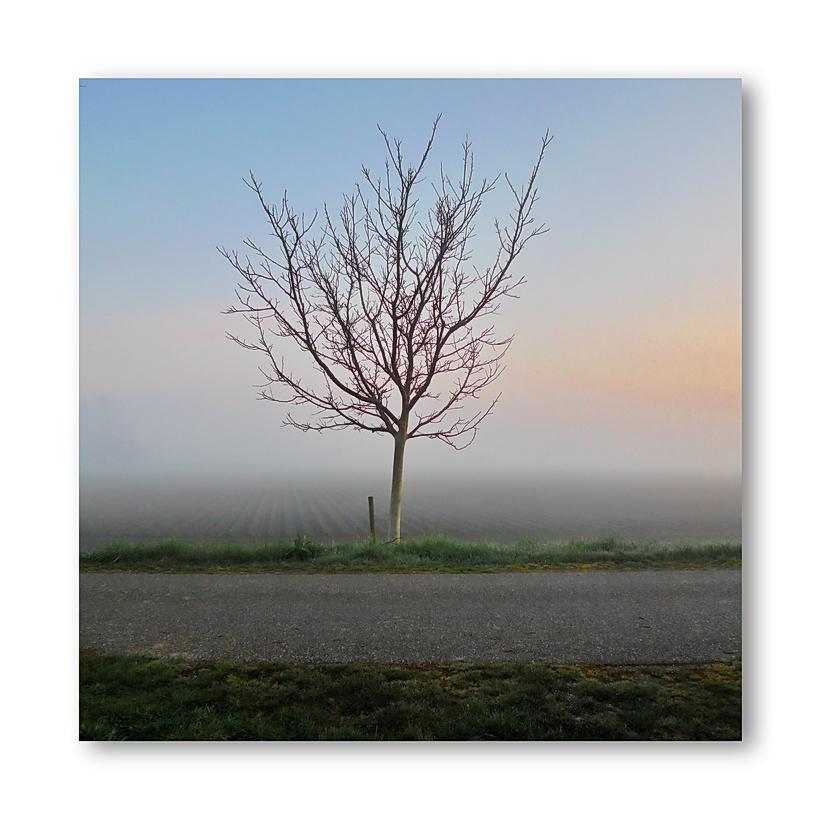 Sun Rising (Morgenrot) 12.04.2012, 07:21:59 (Oranjedijk)