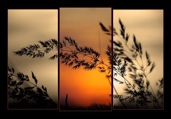 Sun -Trio