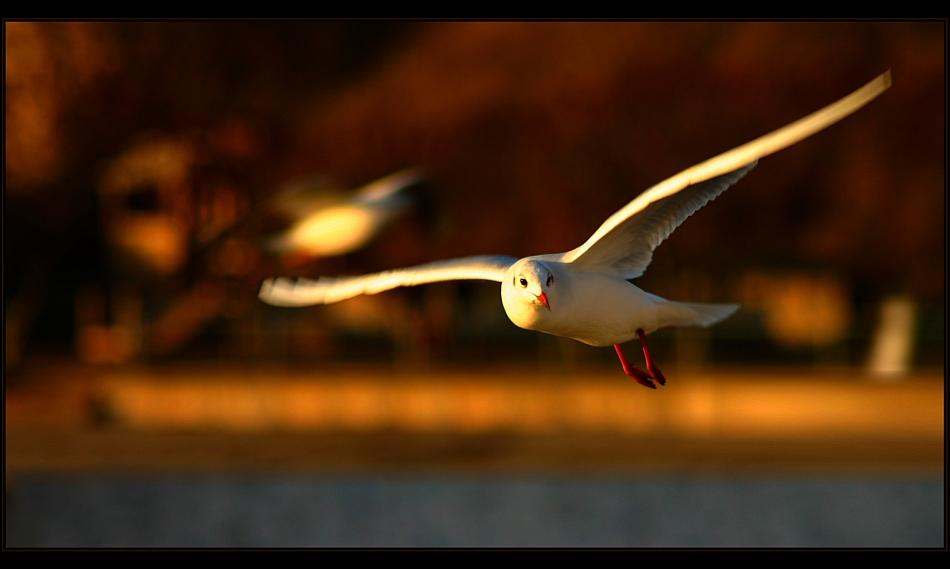 :. Sun wing .: