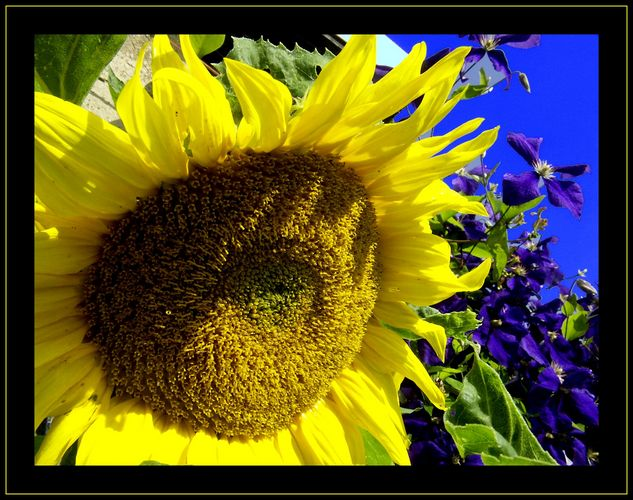 Sunblue