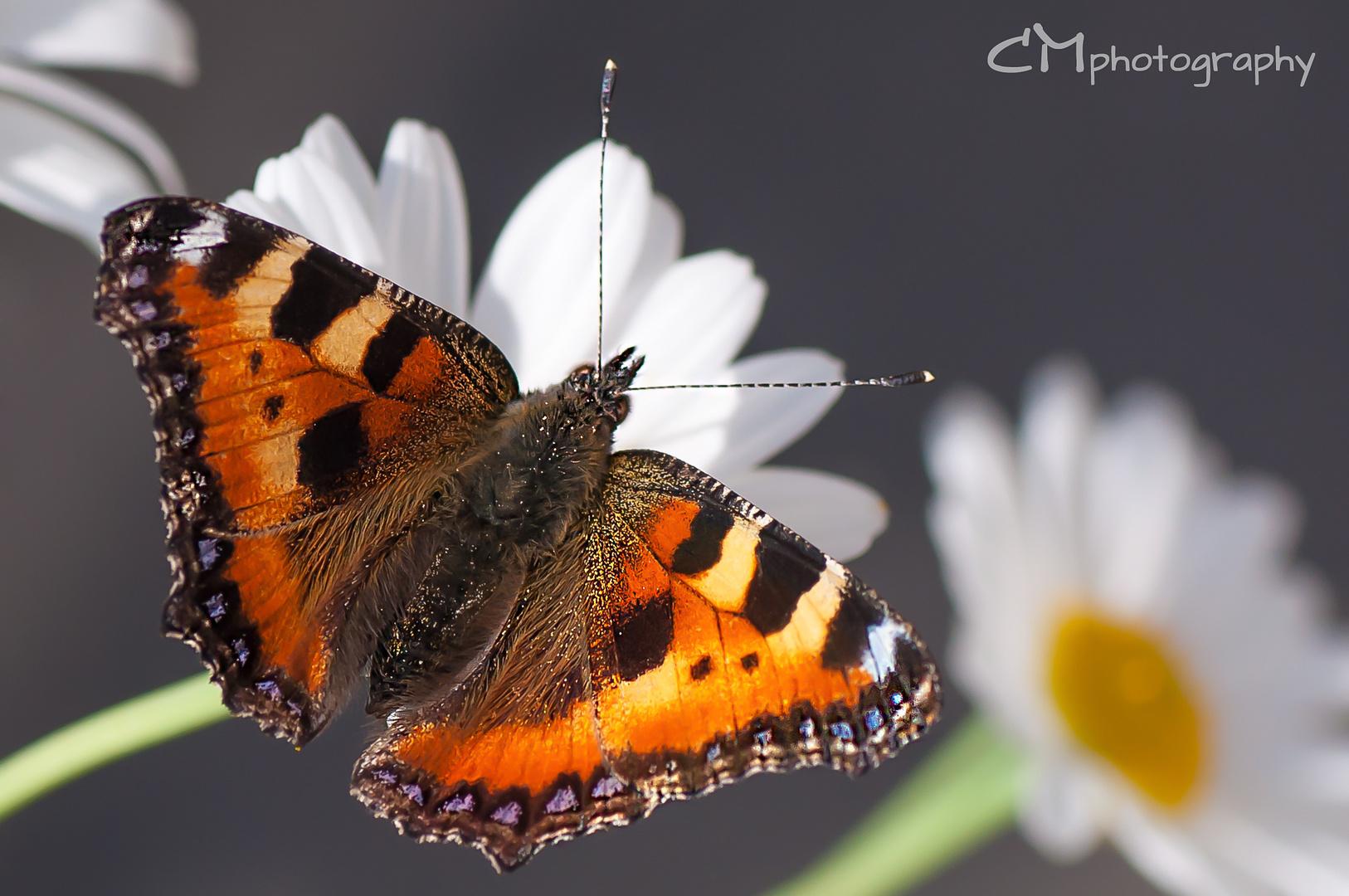 Sunday´s Butterfly