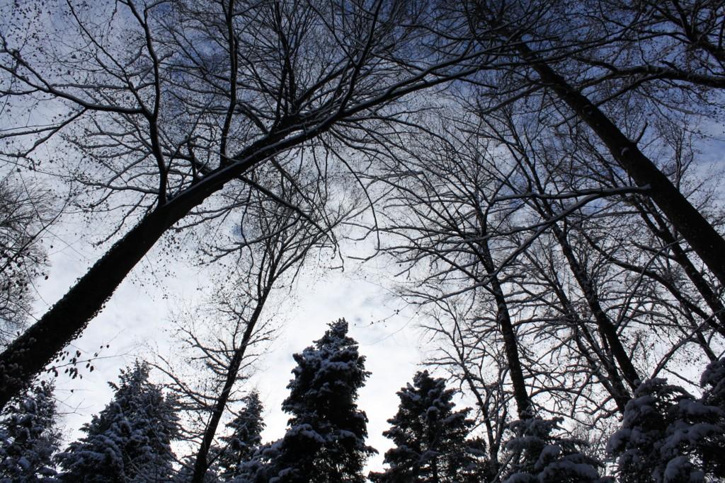 Sundgau sous la neige (2)