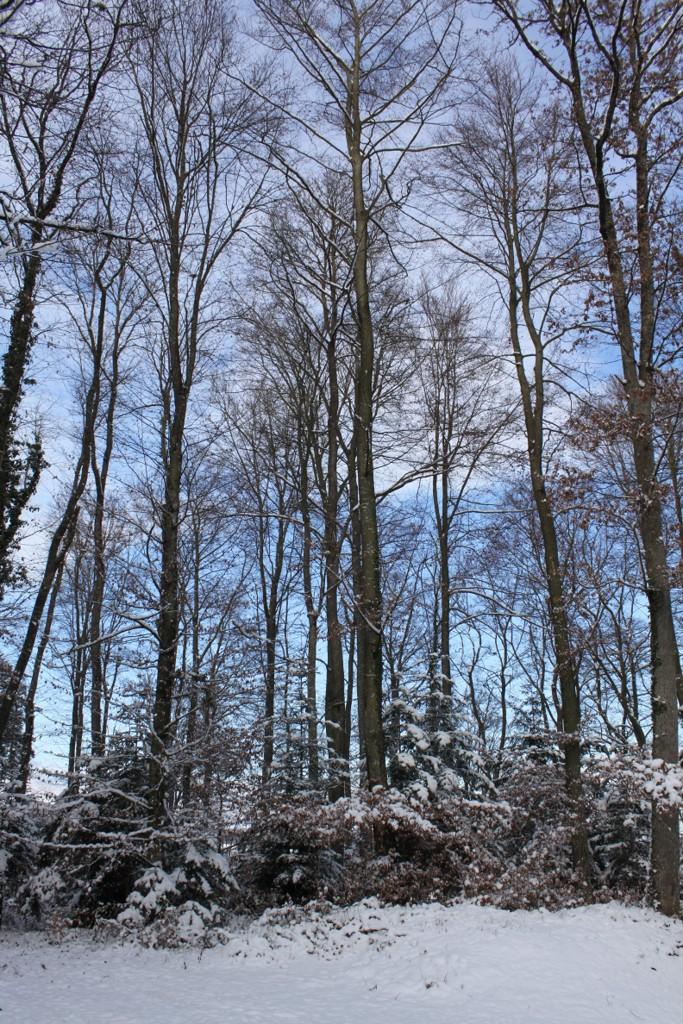 Sundgau sous la neige