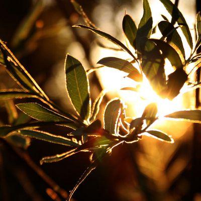 Sundown #01