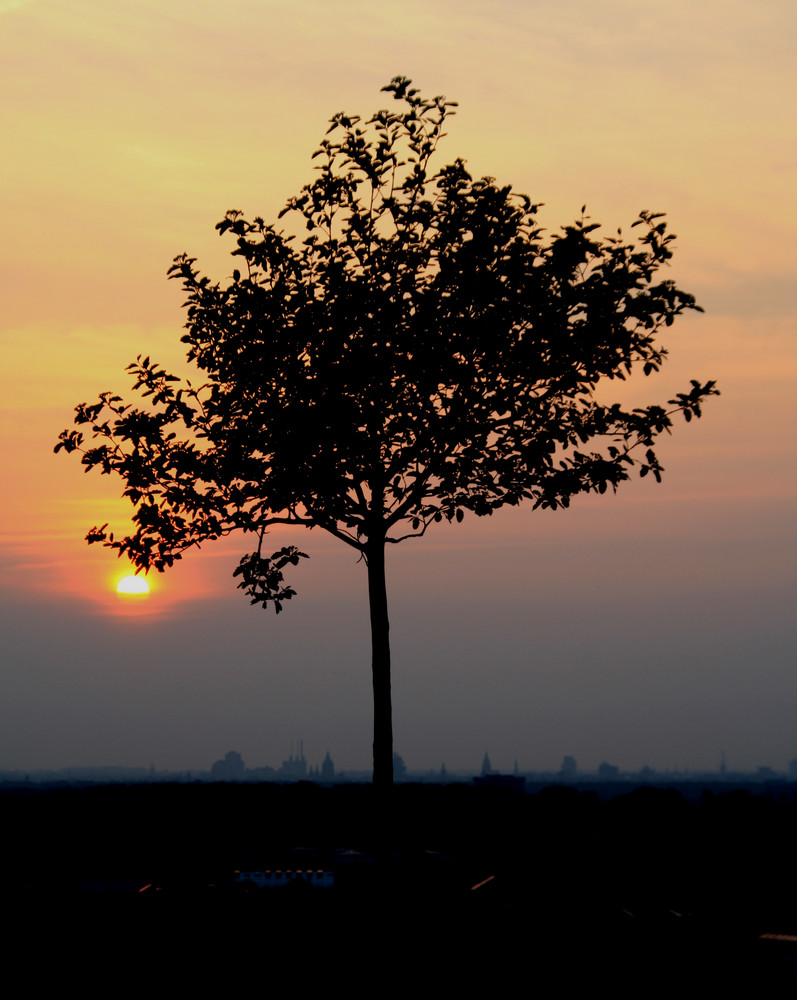 Sundown am Kronsberg