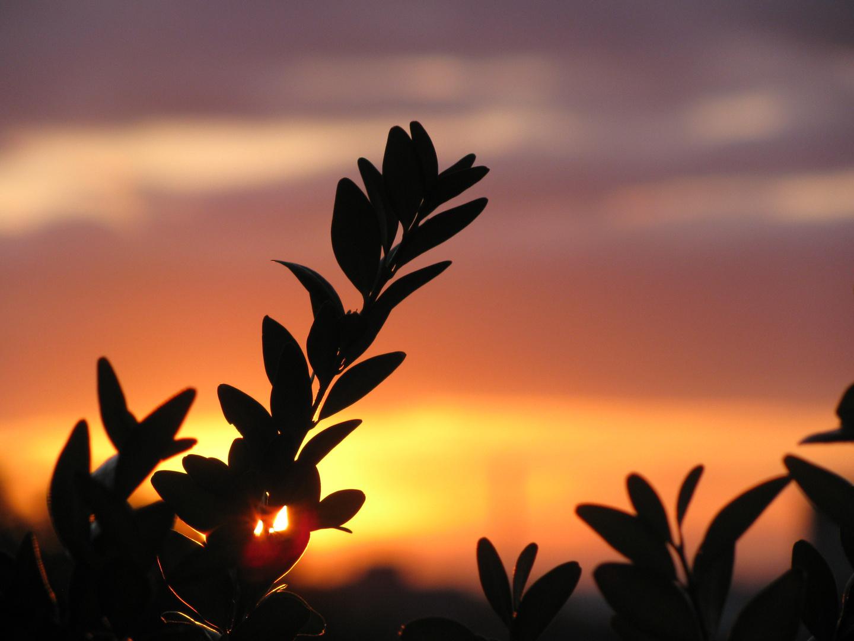 sundown BL (schweiz)