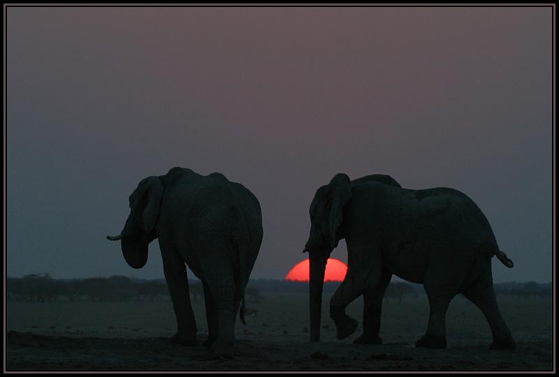 Sundown in der Nxai Pan