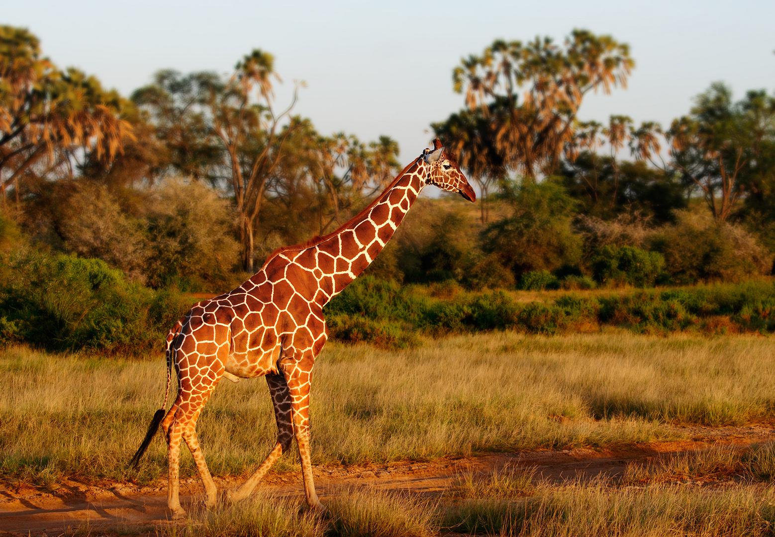 Sundown in Samburu