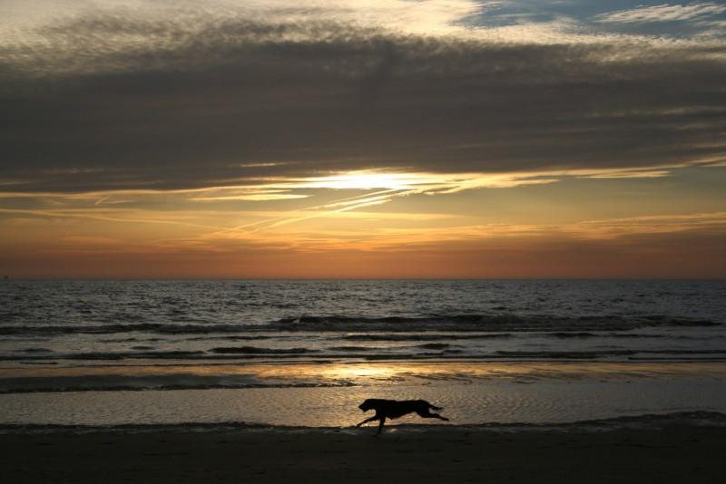 sundown with dog :-)