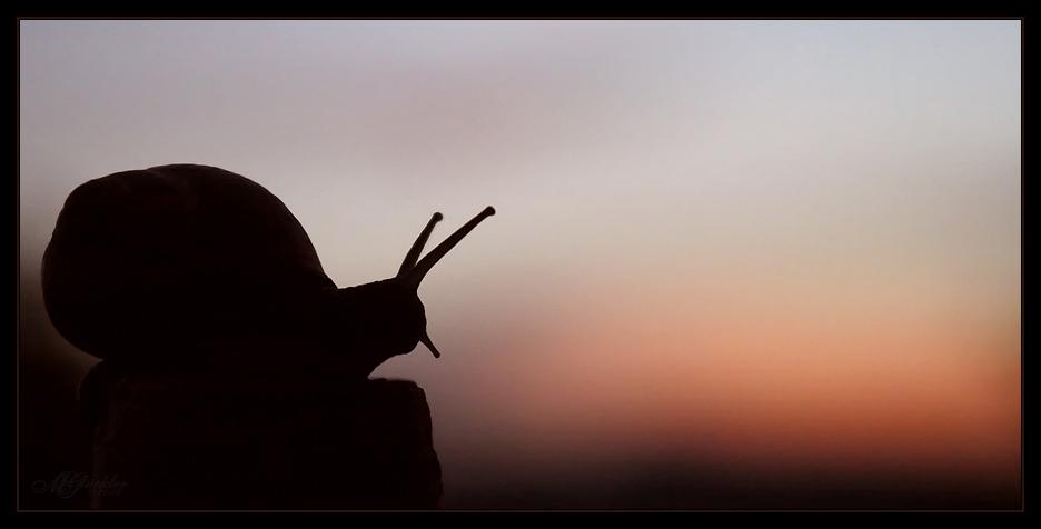 sundown:calm (reload)