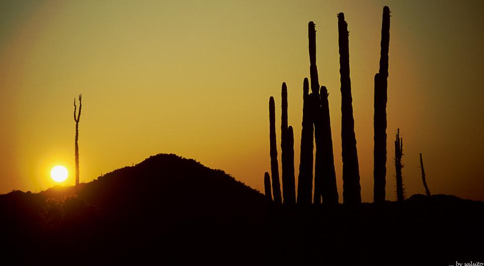 Sundowner in Baja