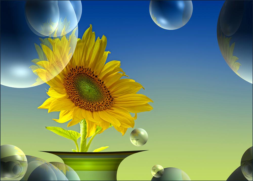 Sunflower meets Bubbles