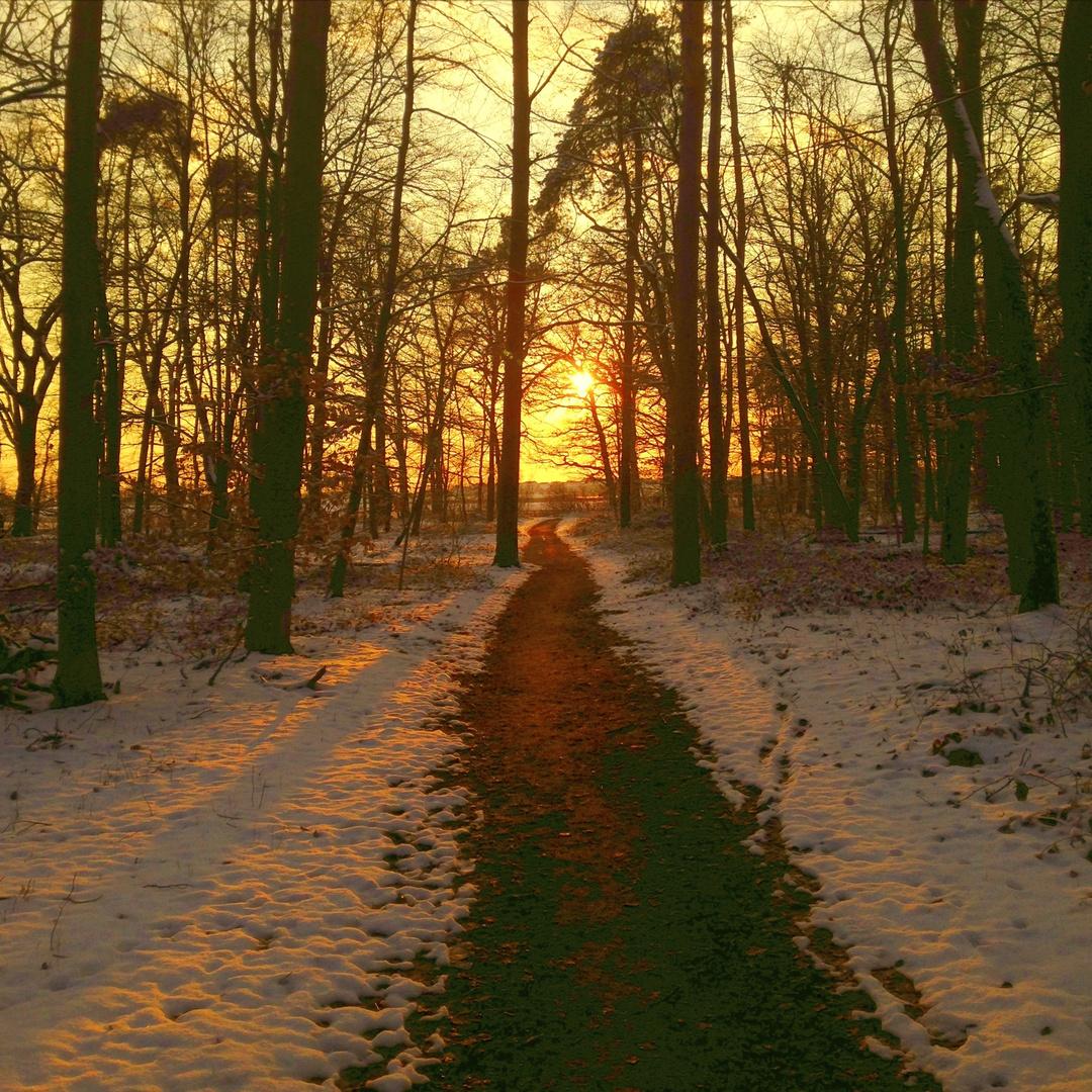Sun_Forest