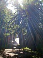 Sunlight in the Park