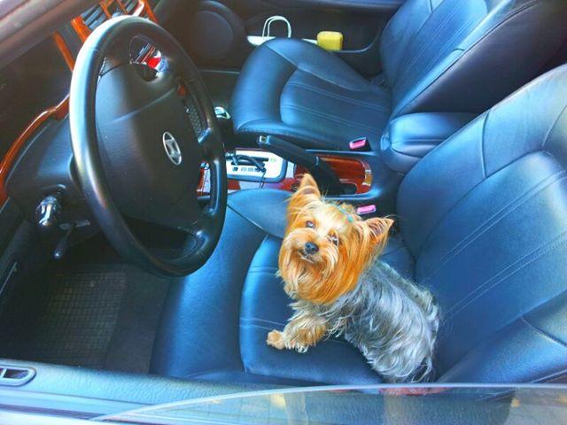 SUNNY der Fahrer