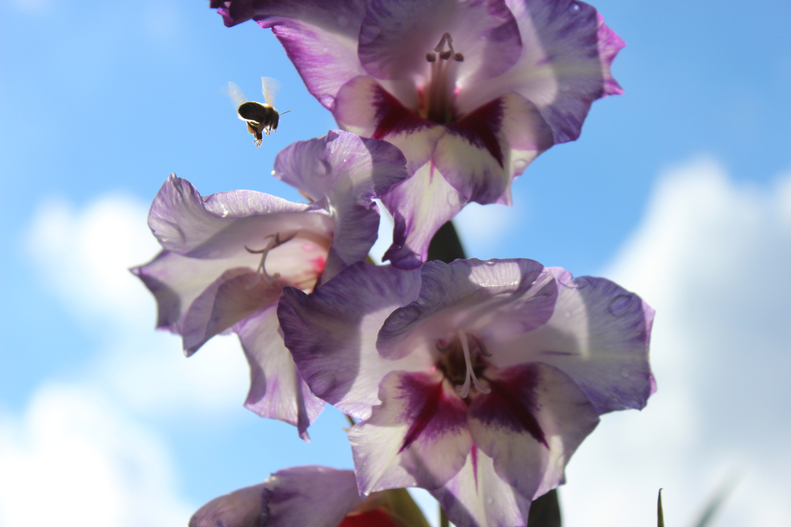 Sunny Flower Day