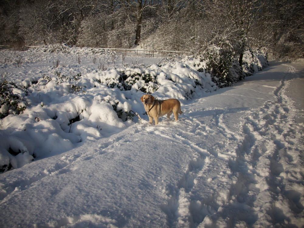 Sunny im Schnee