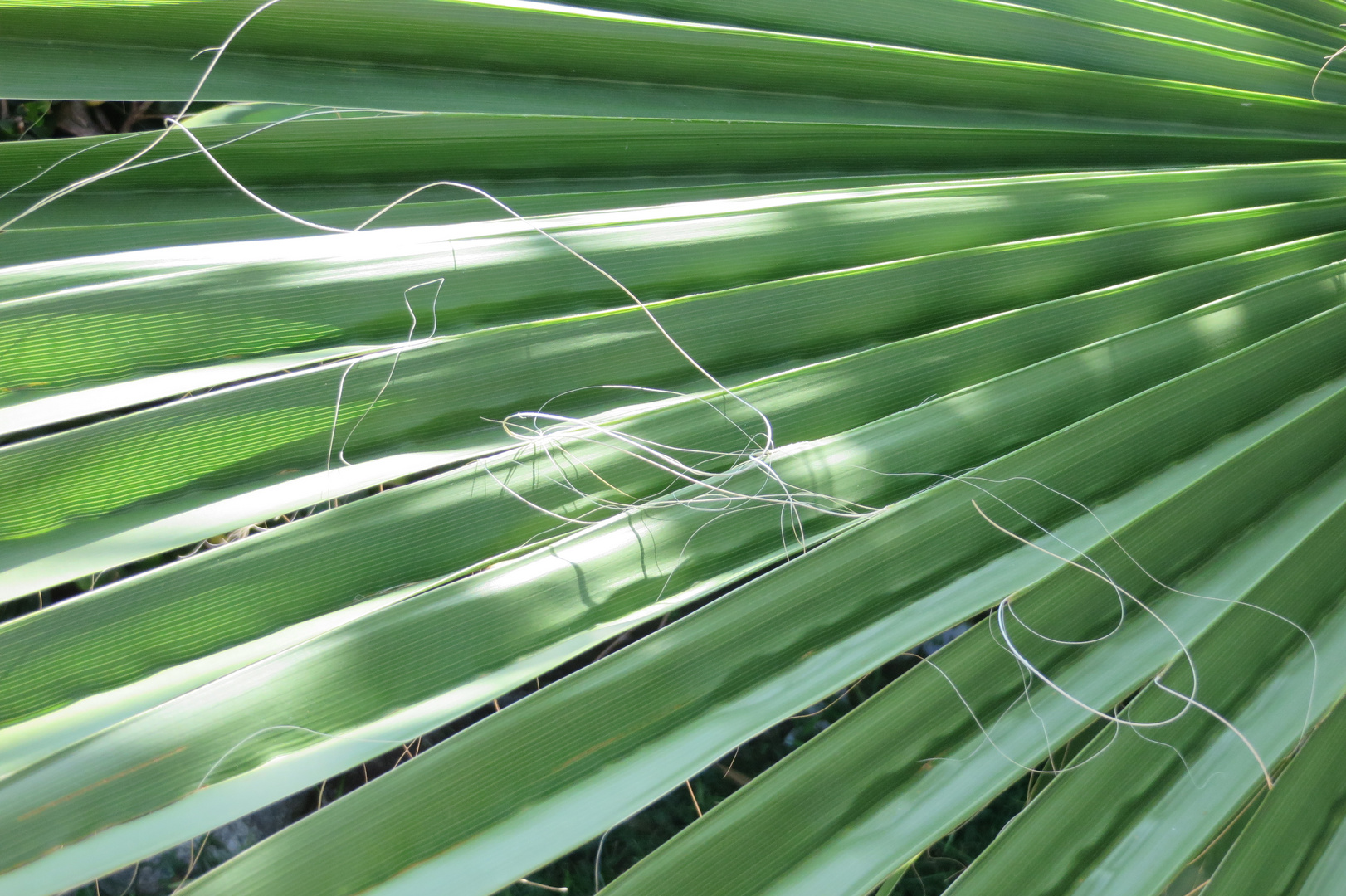 Sunny plant