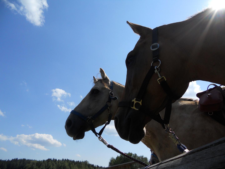 Sunny und Cody neugierig :-)