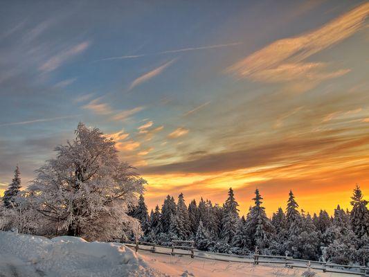 Sunny winter series I