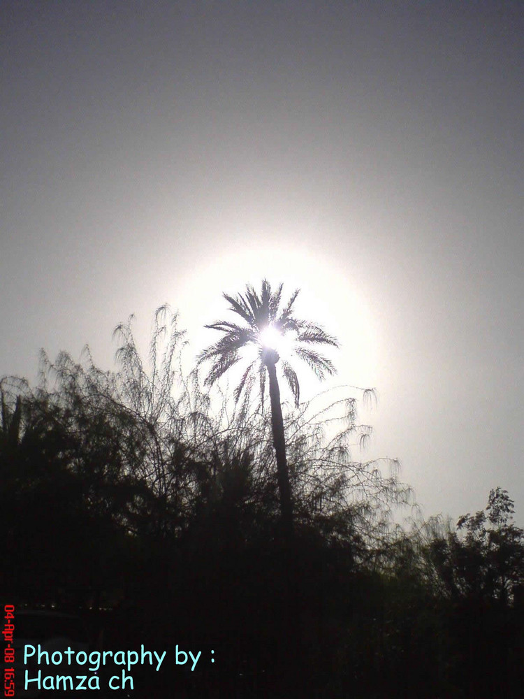 Sun&palm