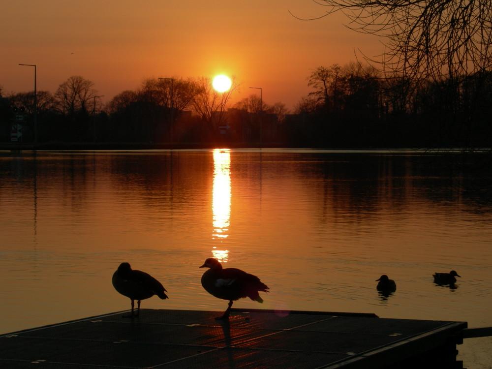 Sunrise am Main 2