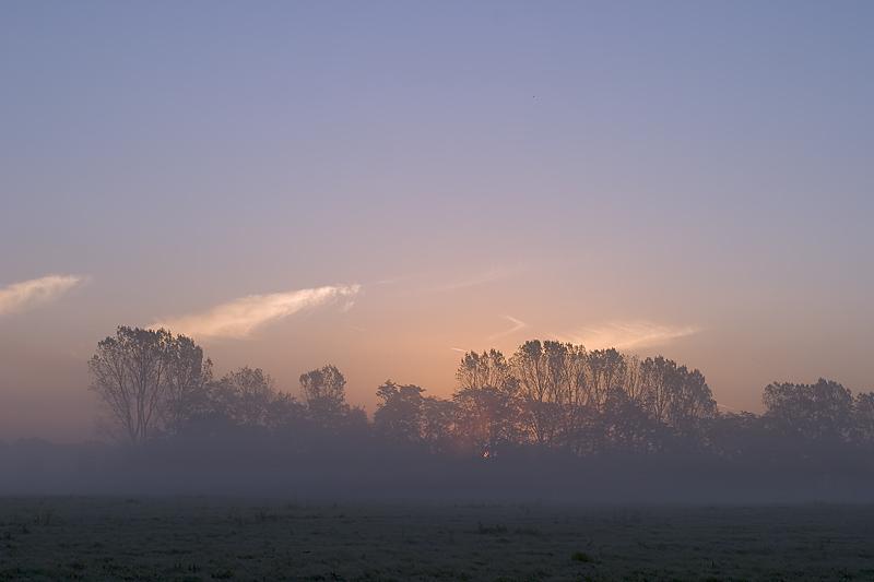 Sunrise and Fog over Meadows II