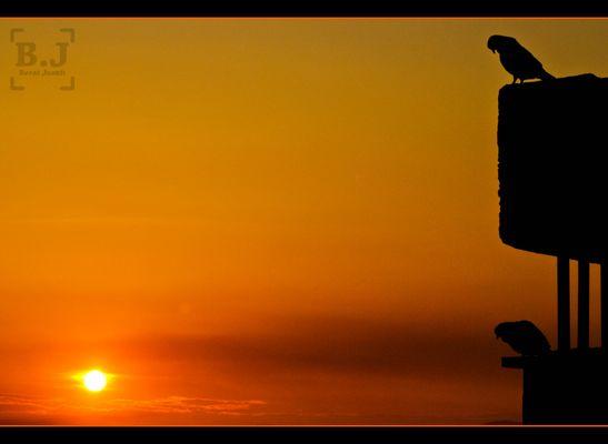Sunrise and Pigeons