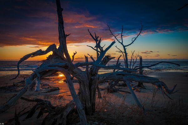 Sunrise Boneyard Beach Bulls Island South Carolina USA