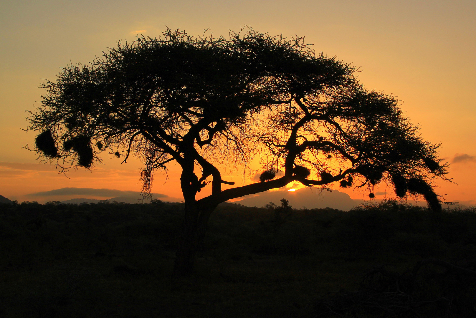 *Sunrise* im Tsavo West