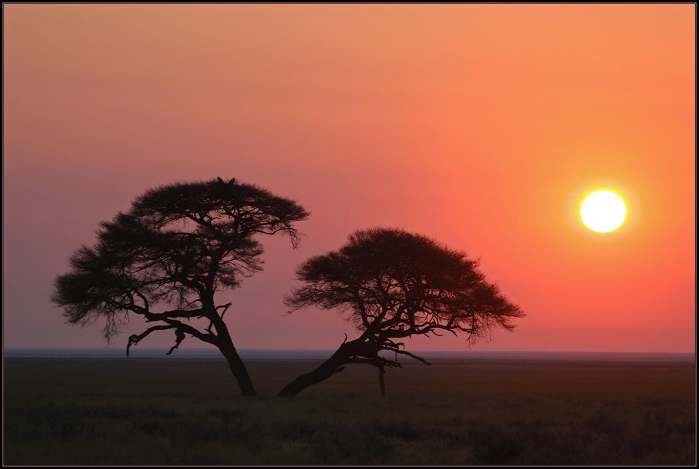 Sunrise in Etosha