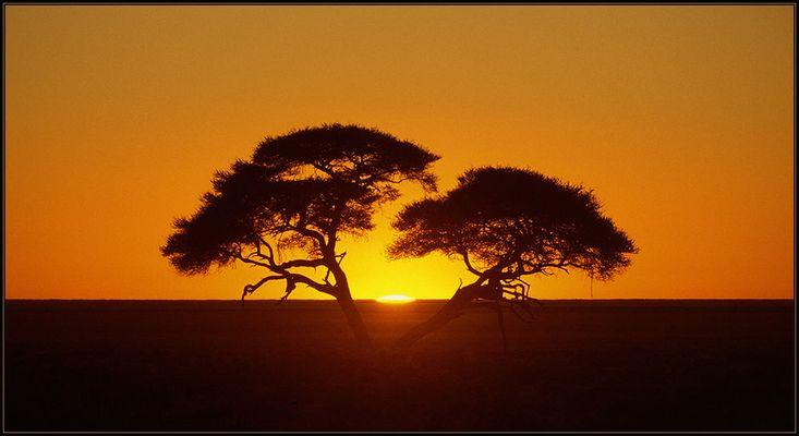 Sunrise in Etosha (reload)