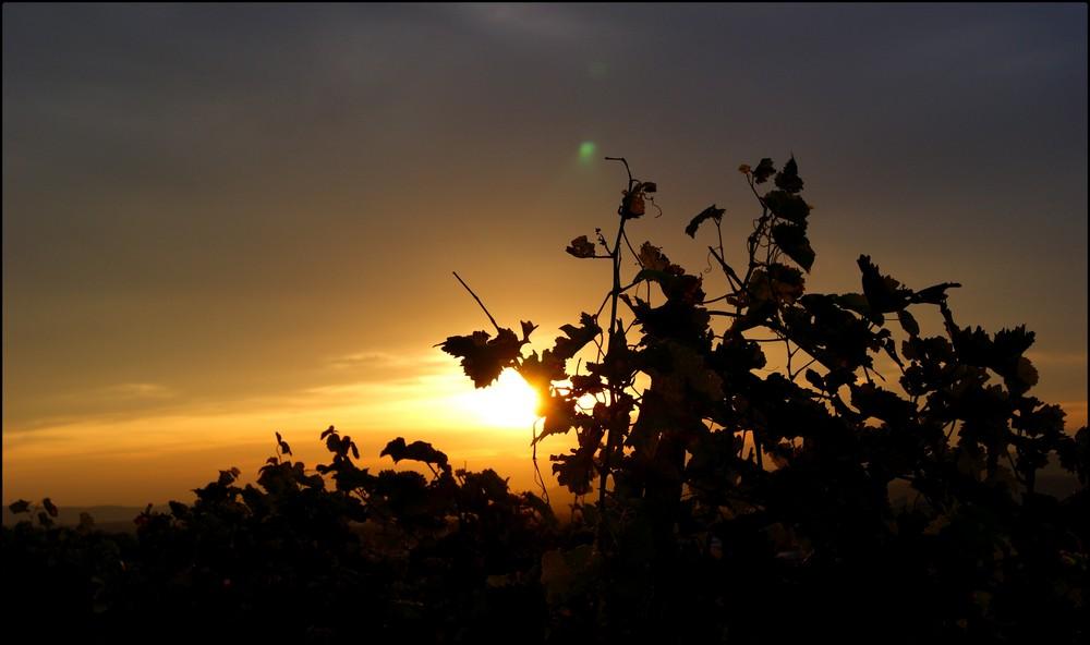 sunrise in HN