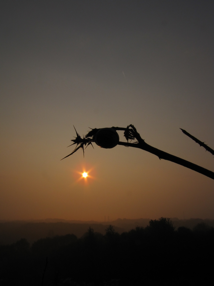 sunrise with snail