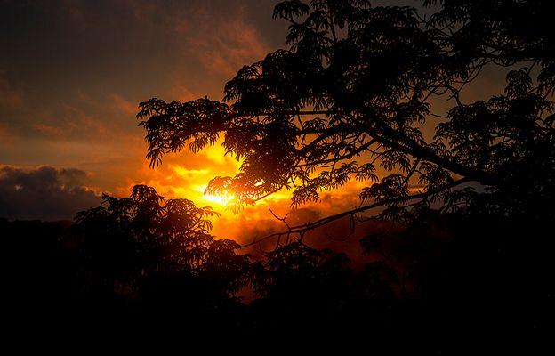 Sunset Amazonian jungle
