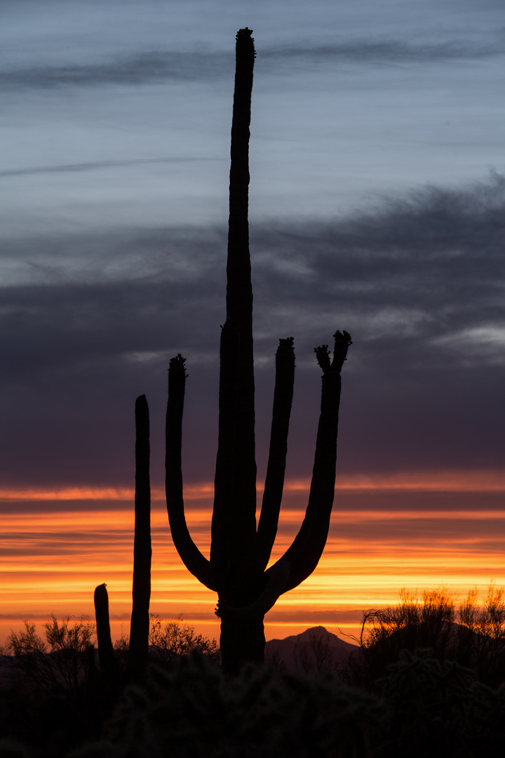 sunset at Saguaro National Park West