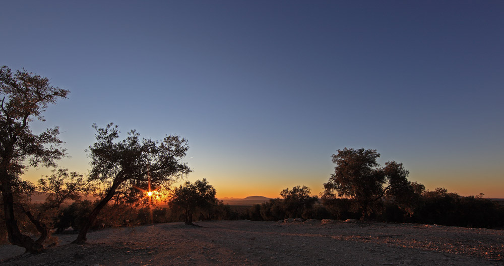 Sunset between the olive trees in Antequera