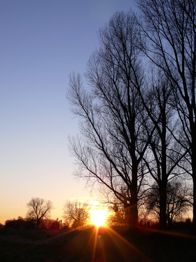 sunset between the trees