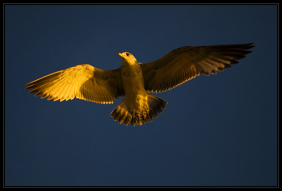 Sunset Fly