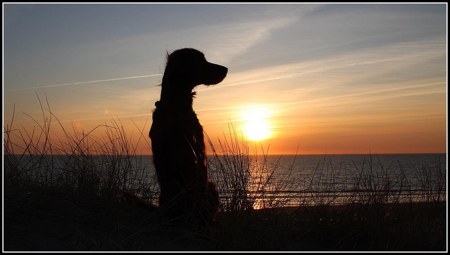 *Sunset Girl*