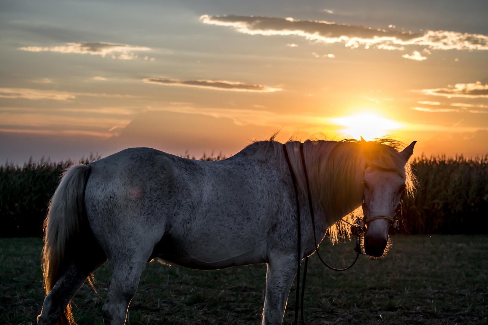 Sunset Horse 2