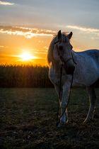 Sunset Horse 3